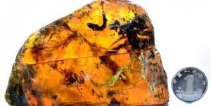Bilim Adamları 100 Milyon Yıllık Bir Kuş Fosili Buldu