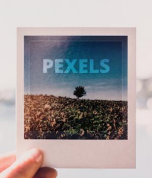 Pexels Ekran Görüntüleri - 1