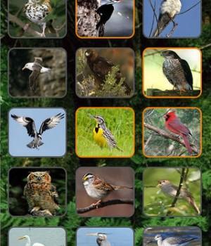 Kuş Sesleri Ekran Görüntüleri - 4