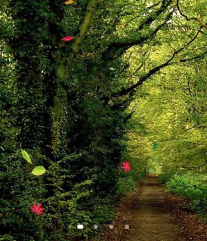 Orman Canlı Duvar Kağıdı Ekran Görüntüleri - 3