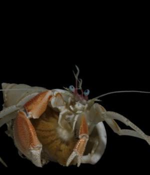 Census of Marine Life Ekran Görüntüleri - 2
