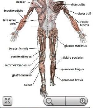 Human Anatomy Ekran Görüntüleri - 1