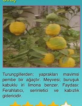 Şifalı Bitkiler - Doğal Tedavi - Şifalı Otlar Ekran Görüntüleri - 4
