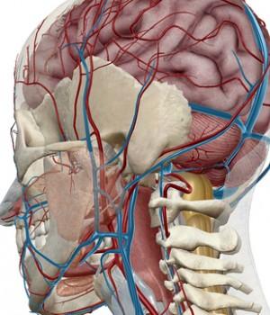 Human Anatomy Atlas Ekran Görüntüleri - 4