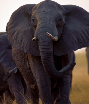 Afrika'da Vahşi Yaşam Teması Ekran Görüntüleri - 1