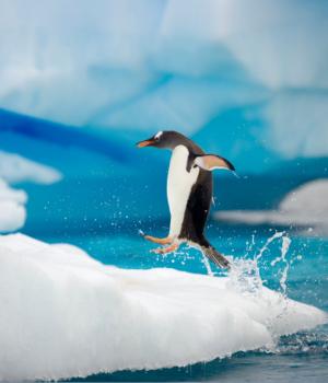 Antarktika Teması Ekran Görüntüleri - 1