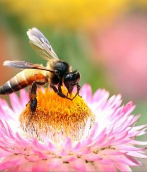 Arılar Teması Ekran Görüntüleri - 1