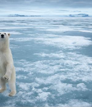 Arktik Teması Ekran Görüntüleri - 1