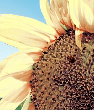 Bahçede Mevsimler Teması Ekran Görüntüleri - 2