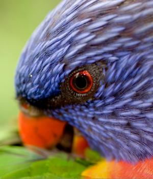 Bing'in En İyileri: Avustralya Teması Ekran Görüntüleri - 1