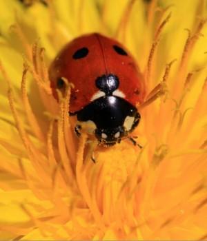 Böcekler Dinamik Teması Ekran Görüntüleri - 4
