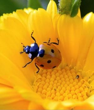 Böcekler Dinamik Teması Ekran Görüntüleri - 1
