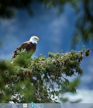 Büyük Kuşlar Teması Ekran Görüntüleri - 2