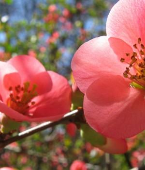 Çek Baharı Teması Ekran Görüntüleri - 2