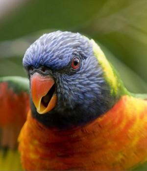 Güzel Kuşlar Teması Ekran Görüntüleri - 1