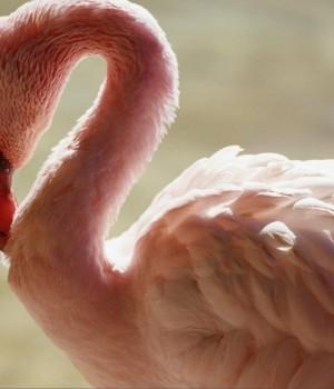 Güzel Kuşlar Teması Ekran Görüntüleri - 3