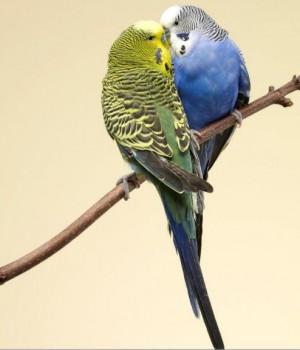 Hayvanların Aşkı Teması Ekran Görüntüleri - 3