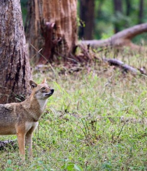 Hindistan'da Vahşi Yaşam Teması Ekran Görüntüleri - 1