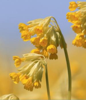İsveç'te İlkbahar Teması Ekran Görüntüleri - 2