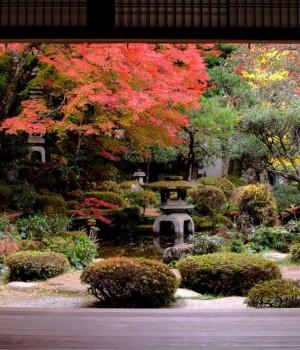 Japonya'da Sonbahar Rengi Teması Ekran Görüntüleri - 1