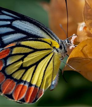 Nagpur Kelebekleri Teması Ekran Görüntüleri - 3