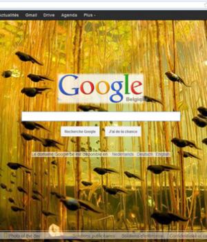 National Geographic Picture Of The Day On Google Ekran Görüntüleri - 1