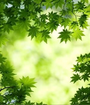Ormanlar Teması Ekran Görüntüleri - 3