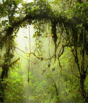 Ormanlar Teması Ekran Görüntüleri - 2