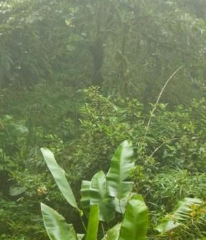 Rain Sounds Ekran Görüntüleri - 3