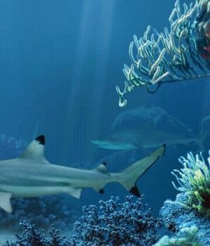 Shark Reef Live Wallpaper Free Ekran Görüntüleri - 4