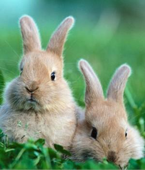 Tavşanlar Teması Ekran Görüntüleri - 2