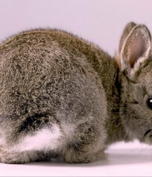 Tavşanlar Teması Ekran Görüntüleri - 1