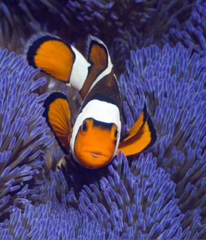 Tropikal Balık Teması Ekran Görüntüleri - 1