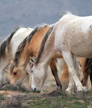 Yabani Atlar Teması Ekran Görüntüleri - 3