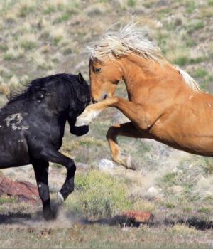 Yabani Atlar Teması Ekran Görüntüleri - 2