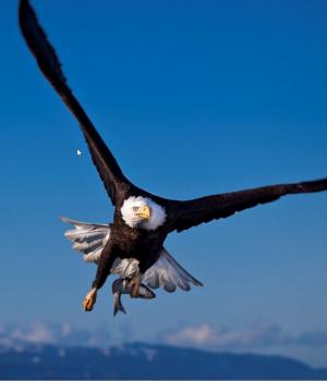 Yırtıcı Kuşlar Teması Ekran Görüntüleri - 3