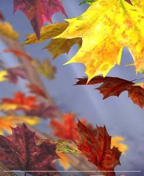 Autumn Tree Free Wallpaper Ekran Görüntüleri - 4