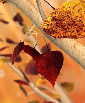 Autumn Tree Free Wallpaper Ekran Görüntüleri - 3