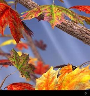 Autumn Tree Free Wallpaper Ekran Görüntüleri - 2