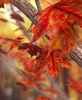 Autumn Tree Free Wallpaper Ekran Görüntüleri - 1