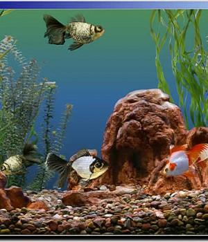 Goldfish Aquarium Ekran Görüntüleri - 2