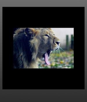 Photo Squarer Ekran Görüntüleri - 1