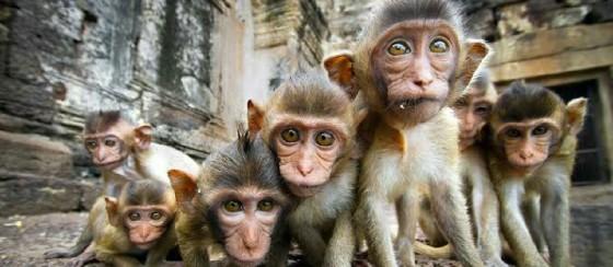 Maymun Çetesi Koronavirüs Kan Testlerini Çaldı