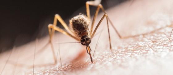 Yaz Aylarında Sivrisinek İstilası Bekleniyor: İşte Nedeni