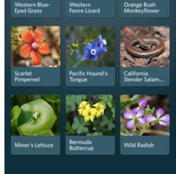 Seek by iNaturalist Ekran Görüntüleri - 1