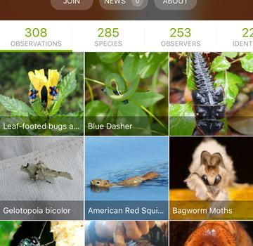 iNaturalist Ekran Görüntüleri - 3