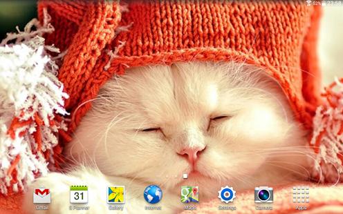 Cats Wallpapers HQ Ekran Görüntüleri - 4