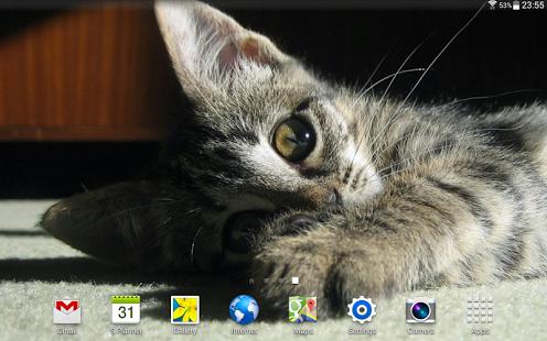 Cats Wallpapers HQ Ekran Görüntüleri - 2