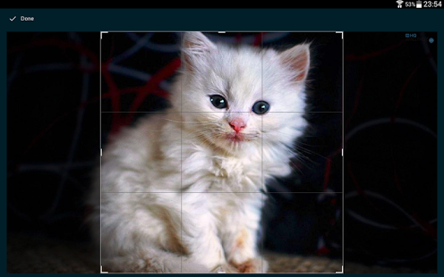 Cats Wallpapers HQ Ekran Görüntüleri - 1