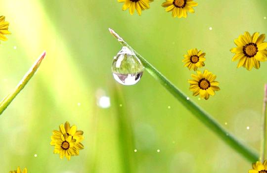Flower Live Wallpaper Ekran Görüntüleri - 5